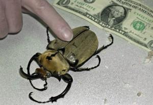 Despre cum era să mă omoare un gândac de bucătărie care nu se afla tocmai în bucătărie...