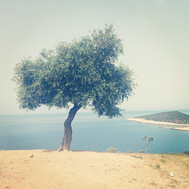 Peisaj thassian