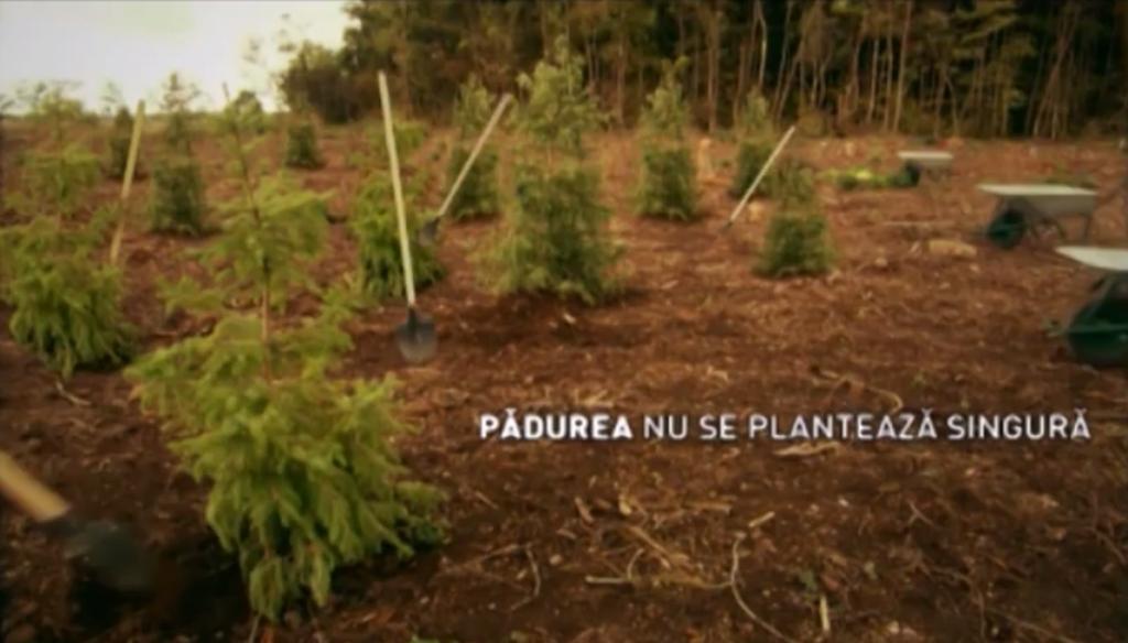 Cum ar fi ca copacii să se planteze singuri? E aproape posibil...