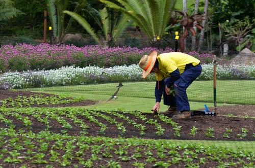 Grădinar